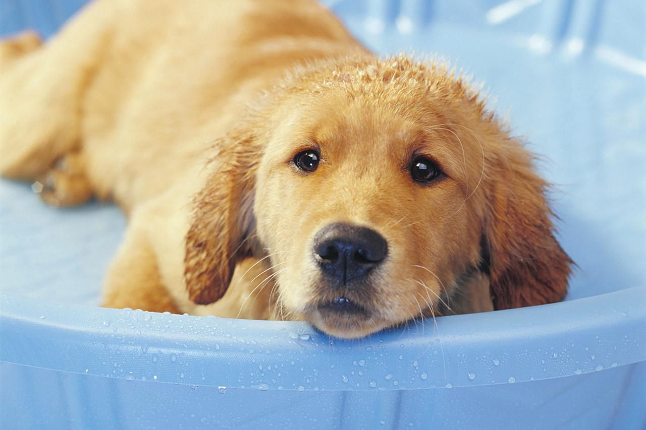 13 steps to giving your puppy a bath bathing a puppy