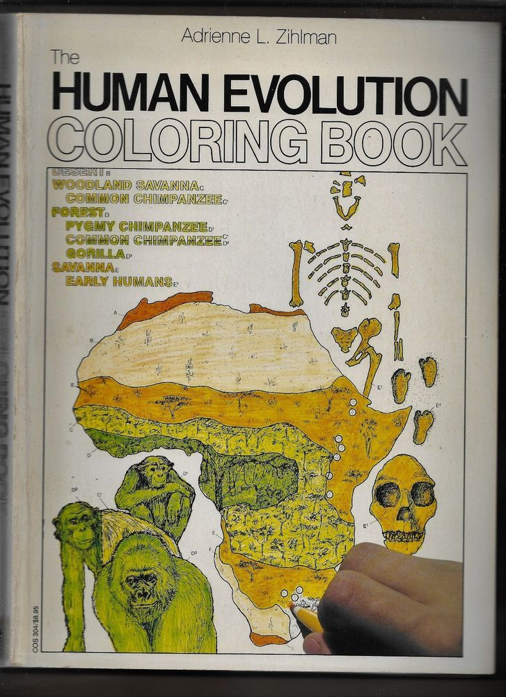 The Human Evolution Coloring Book SC Adrienne L Zihlman 1982 NOT ...