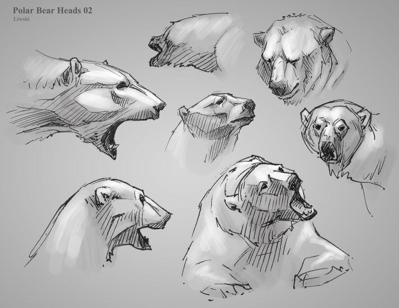 Мои закладки | artwork | Pinterest | Bears, Anatomy and Animal