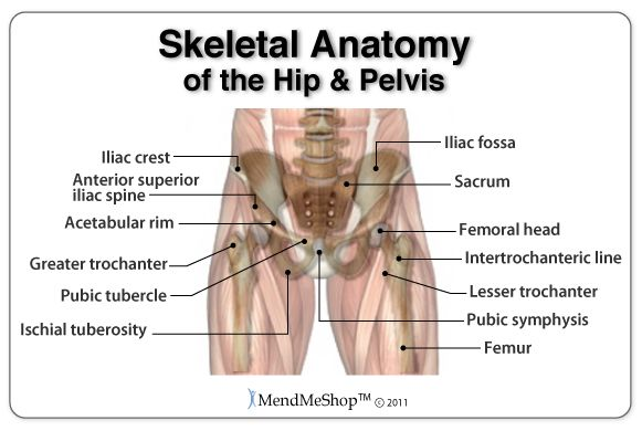 Skeletal Anatomy of the Hip and Pelvis. #hipanatomy | Anatomy ...