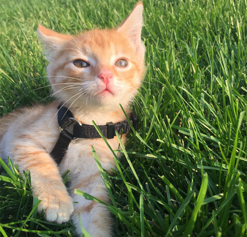 Meet A Cat Who Learned To Walk With The Help Of His Mom Cats Pets Kittens