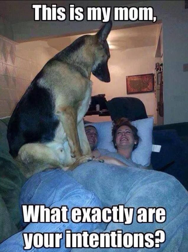 That Is A Very Big Dog Funny Dogs Funny Animals Funny Pictures