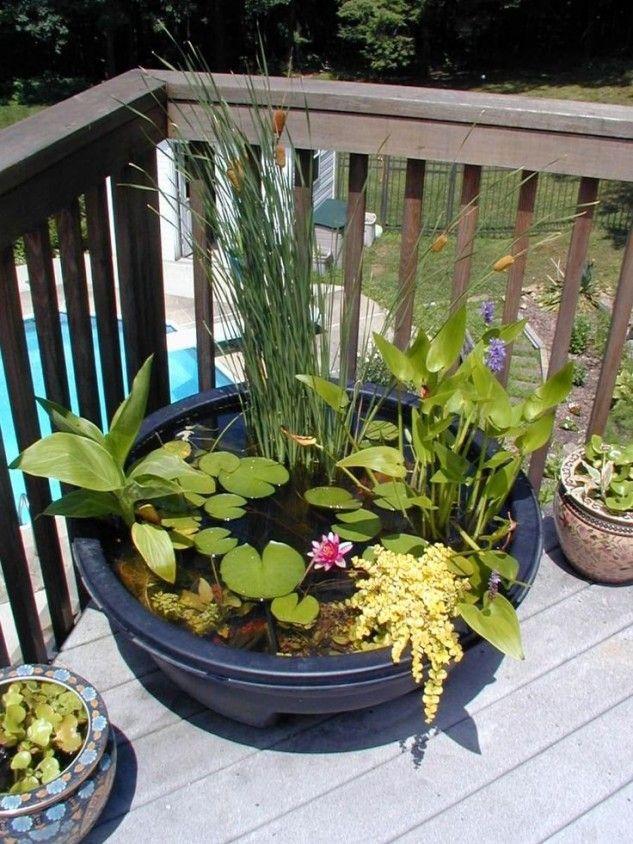 15+ Impressionantes Ideas Mini Jardines Acuáticos Garden