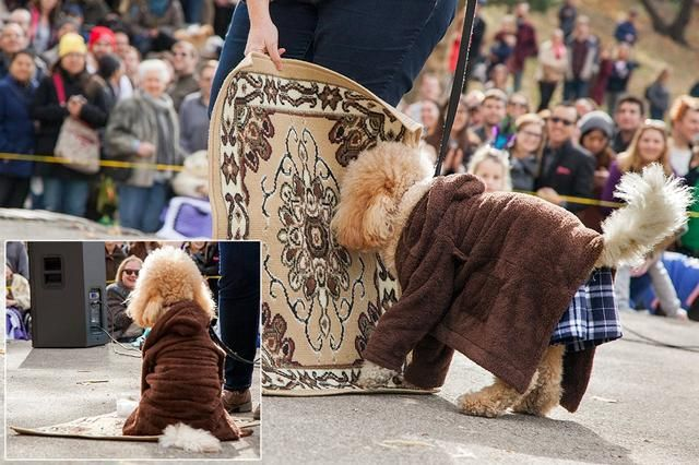 Photos From The Pupkin Parade The Greatest Dog Costume Contest In