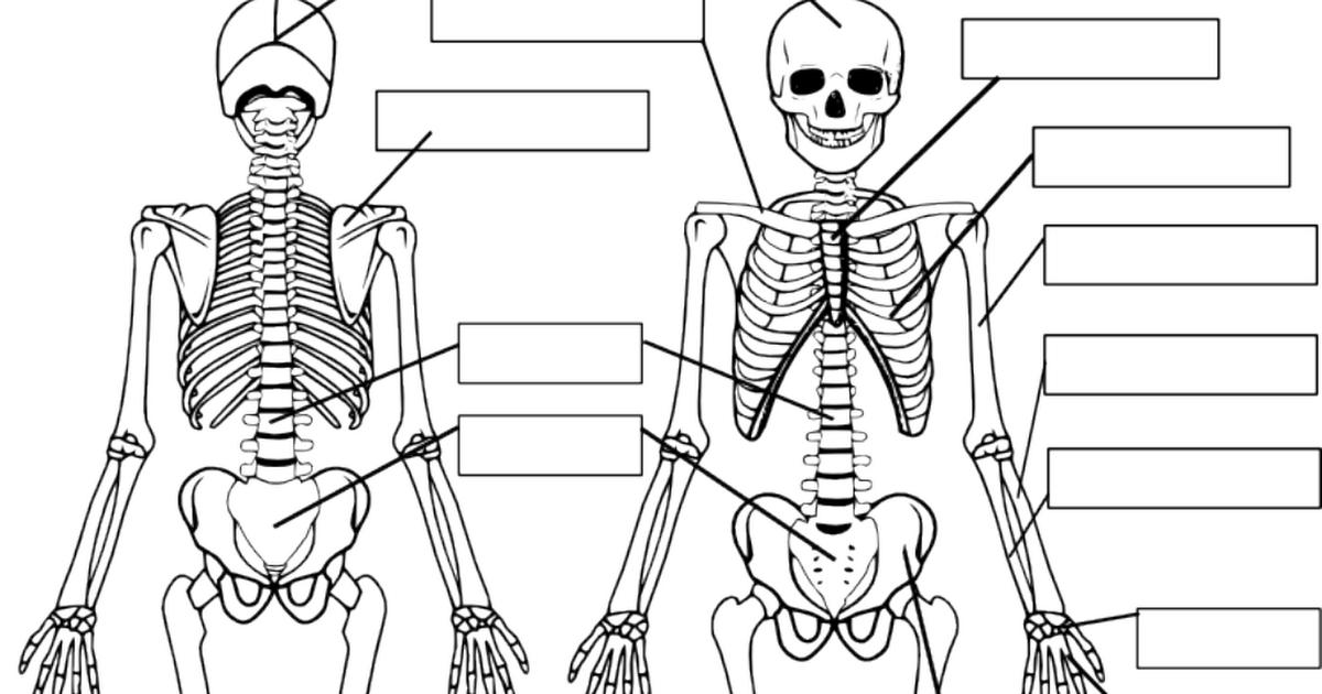 Fitxes Esp Pdf Partes Del Cuerpo Humano Cuerpo Humano Partes Del Cuerpo