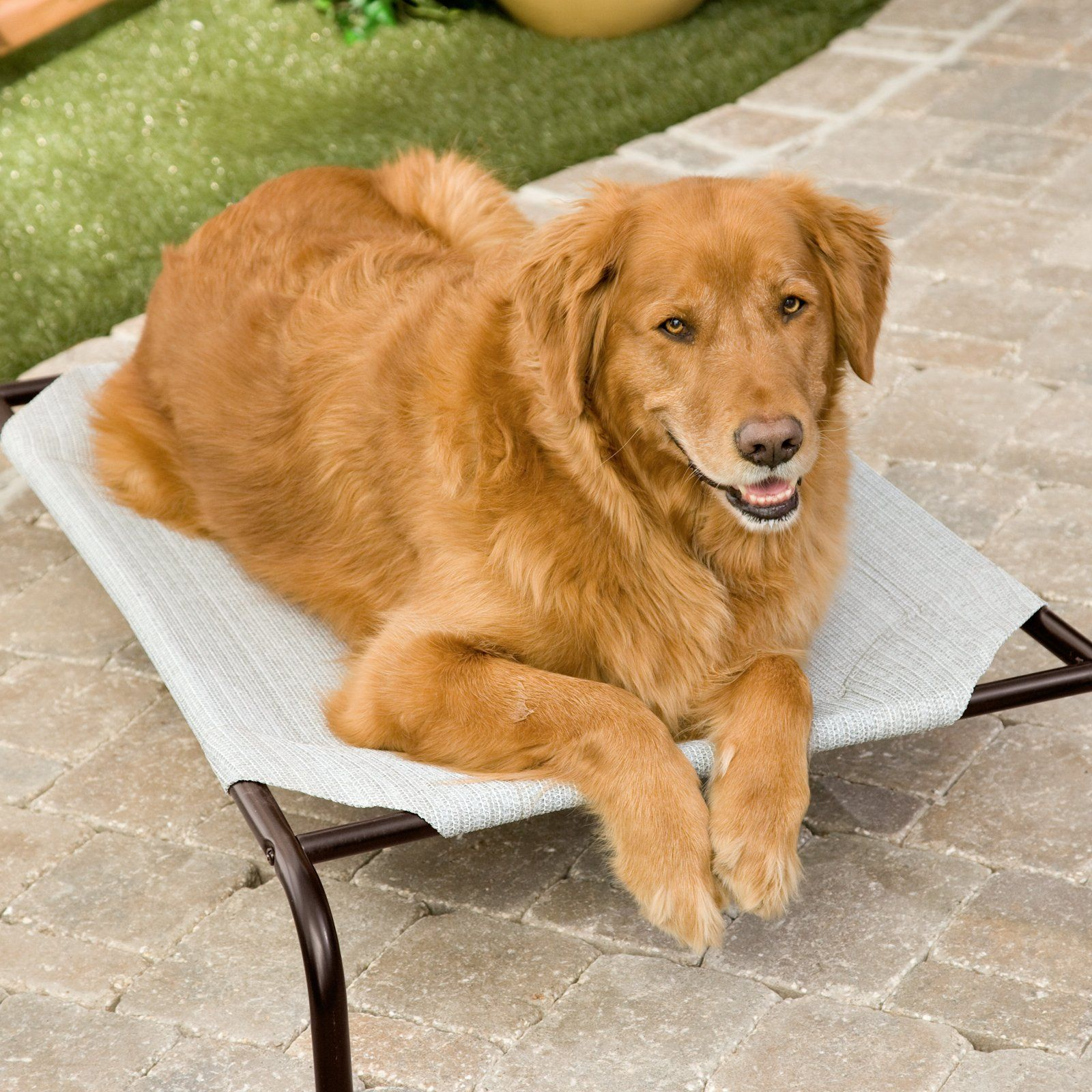 Coolaroo Elevated Pet Bed Grey Elevated Dog Bed Dog Pet Beds
