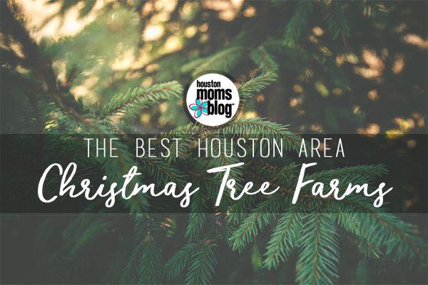 The Best Houston Area Christmas Tree Farms With Images Tree Farms Christmas Tree Farm Cool Christmas Trees