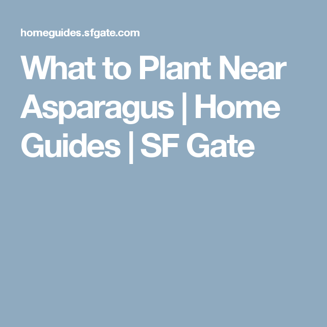 What to Plant Near Asparagus (With images) Painting over