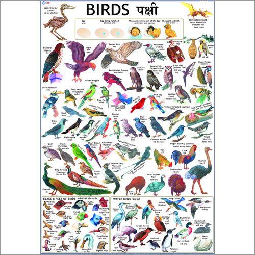 Birds Charts Charts Pinterest Chart and Bird - sanskrit alphabet chart