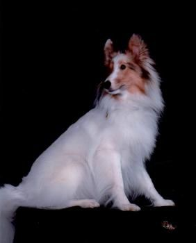 How To Train A Deaf Dog Hand Signals And Sign Language Deaf Dog