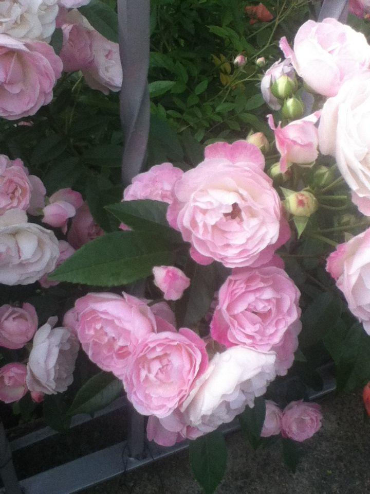 Very pretty flowers flowers pinterest pretty flowers and flowers very pretty flowers mightylinksfo