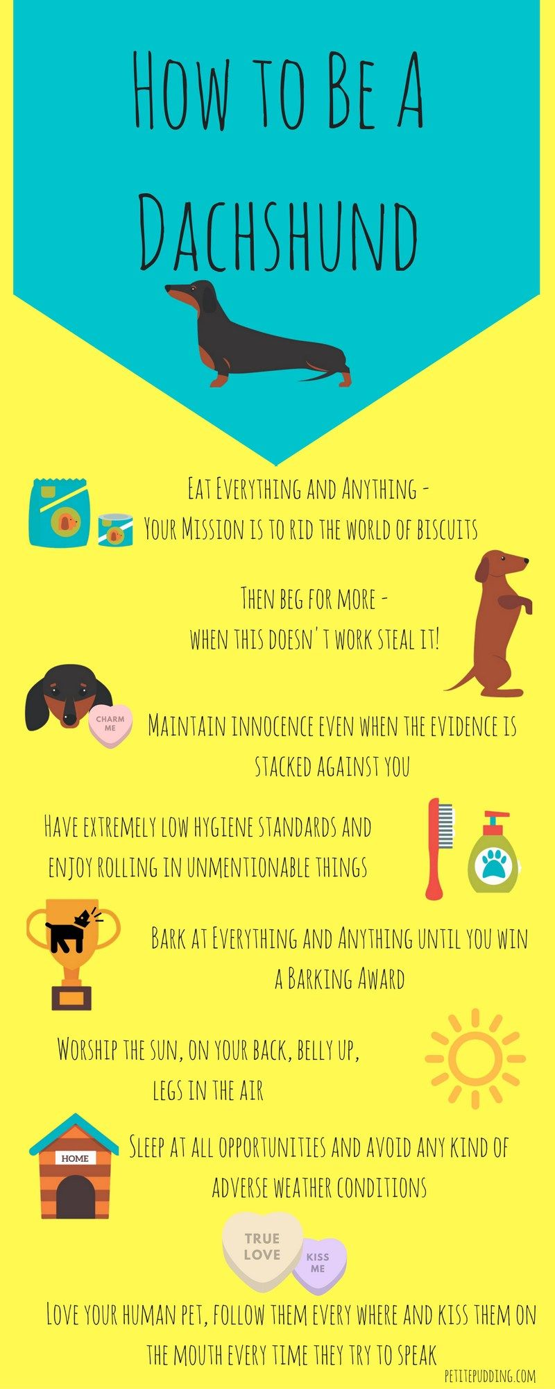 How To Be A Dachshund Infographic Funny Infographic Showing The World Through Those Cheeky Sausage Dog Eyes Who Funny Dachshund Dachshund Puppies Dachshund