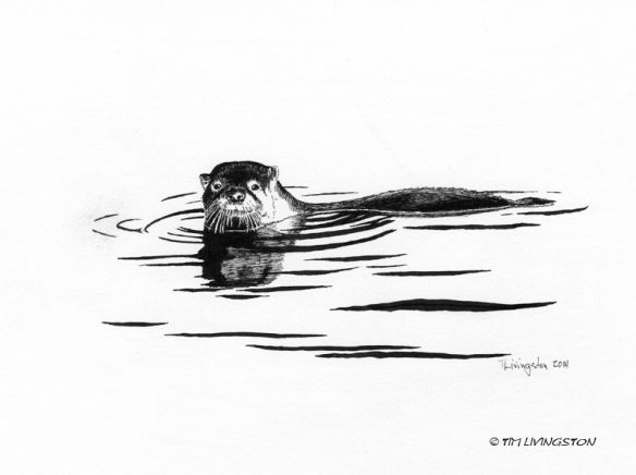 how to draw a river otter