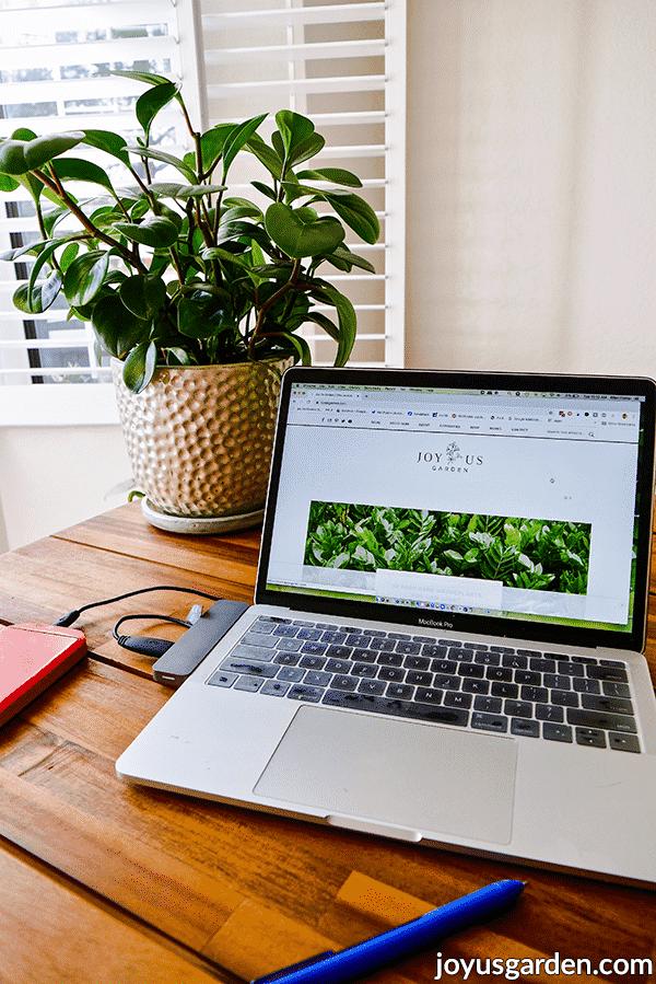 15 Easy-Care Office Plants for Your Desk | Joy Us Garden -   17 planting Indoor desk ideas