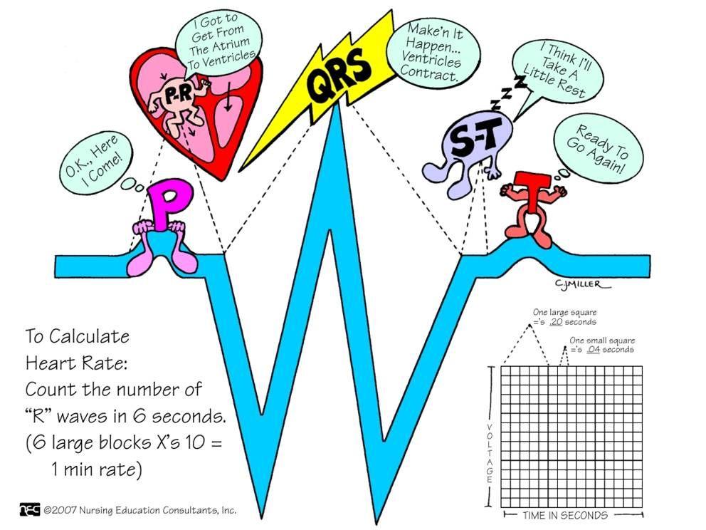 Ekg basics school people and medical