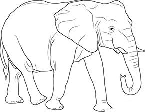Ausmalbild Afrikanischer Elefant Im Zoo Tiere Zum Ausmalen Afrikanischer Elefant Elefant Ausmalbild
