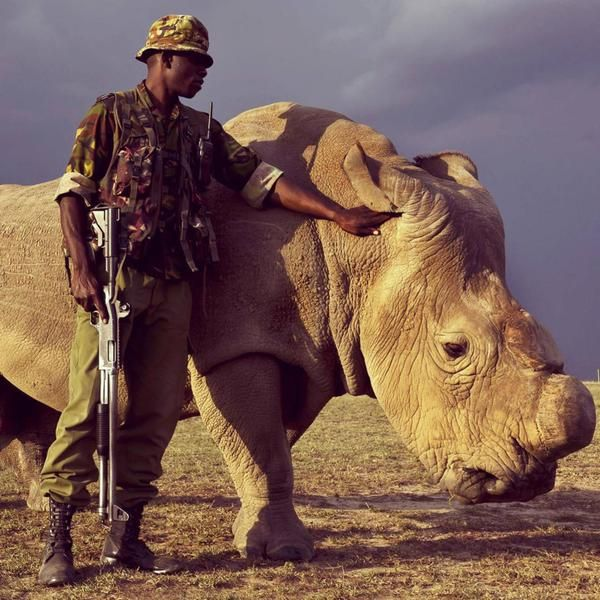 Armed rangers fight to protect the last male Northern White Rhino left on Earth | Photo by Brent Stinton