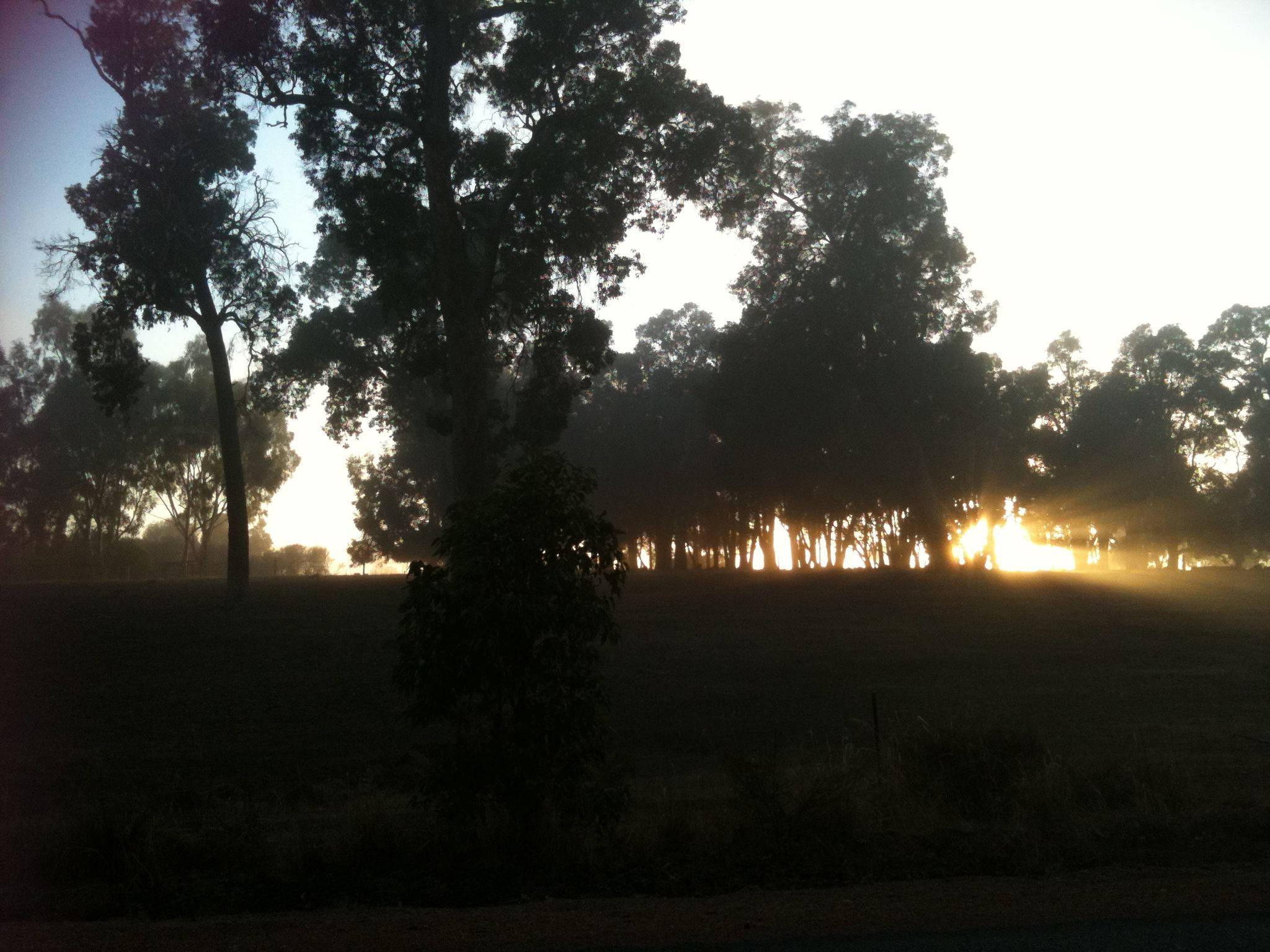 Sunrise down Lilydale Road, Chidlow, WA