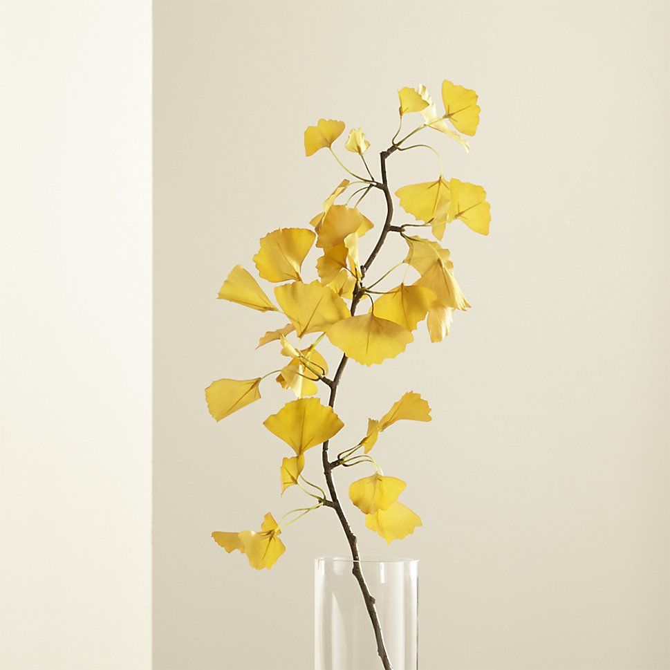 Shop Yellow Ginkgo Stem Branch. The distinctive yellow leaves of the ...