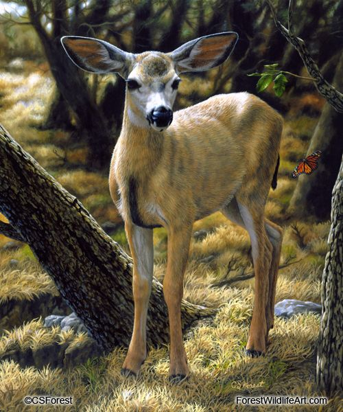 Oil painting of a mule deer fawn and butterfly by wildlife artist Crista Forest. ForestWildlifeArt.com - Fine Art Prints starting at just $25. Notecards also available. Get them here: http://fineartamerica.com/profiles/crista-forest.html