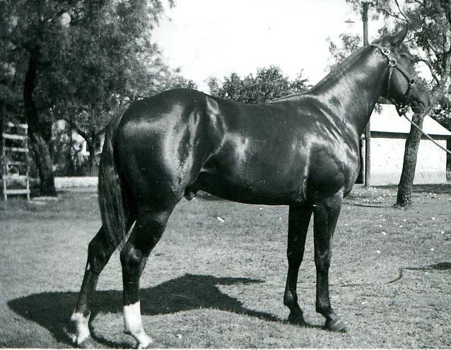 Royal King Was A Horse That You Could Put Anybody On And Win Said Charlie Mae Ablin Wife Of One Of Royal King S O Aqha Horses Horses American Quarter Horse