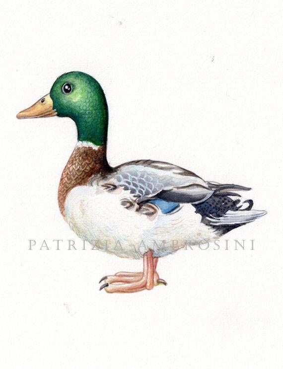 9x7 Original Watercolour bird - Mallard NOT A by happyapplebumblebee, $47.00