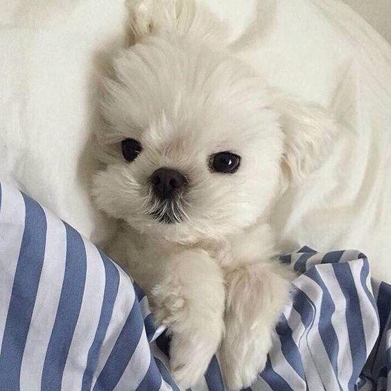 Photo of Sin título lindo   Cachorro   Perro   animal   mascotas