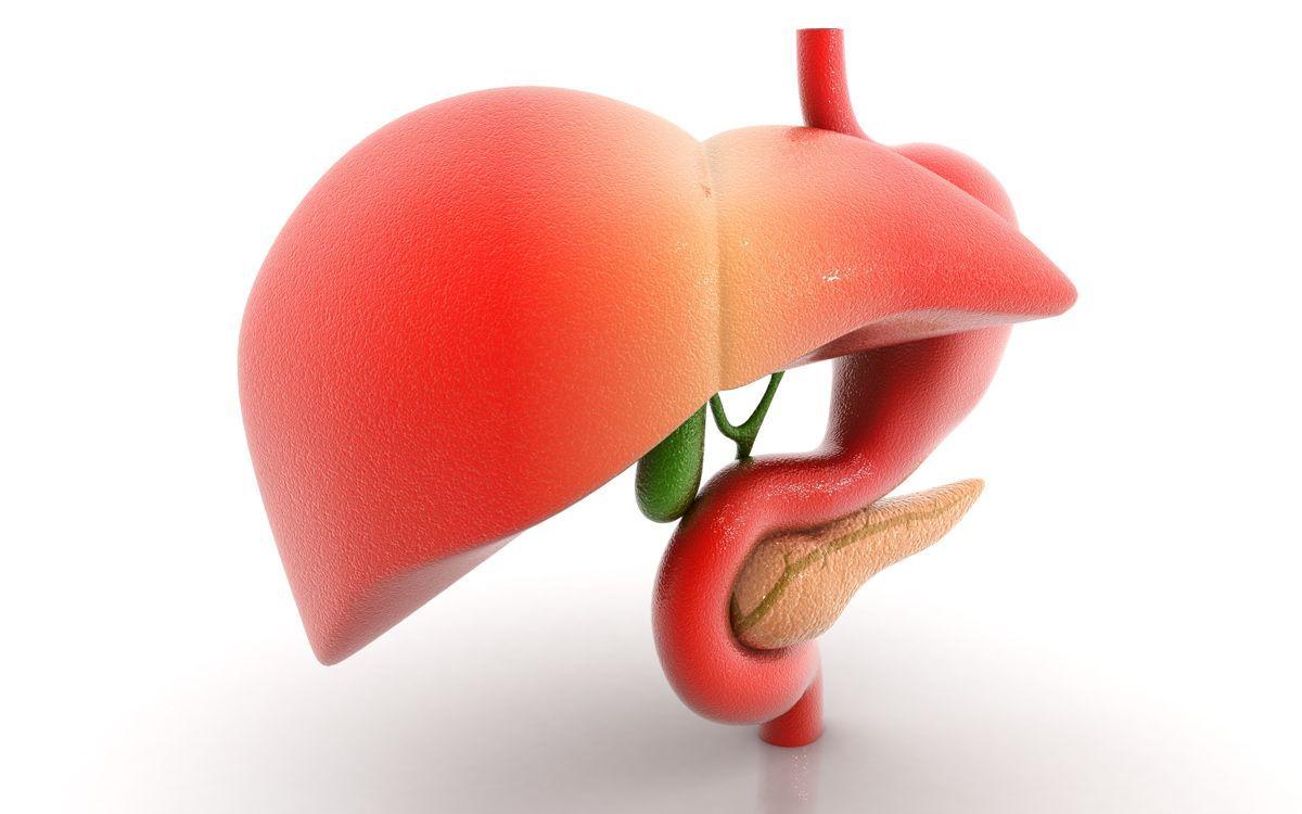 Sabias que el hígado es el órgano más grande del cuerpo humano? La ...