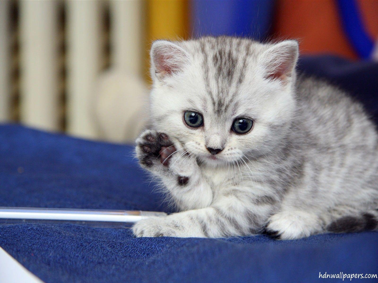 Cute Kittens Wallpapers HD Wallpapers Pinterest