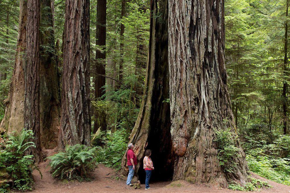 Stehe im Schatten der höchsten Bäume auf Erden im Redwood-Nationalpark. | 11 Nationalparks in den USA, die Du nie wieder verlassen willst