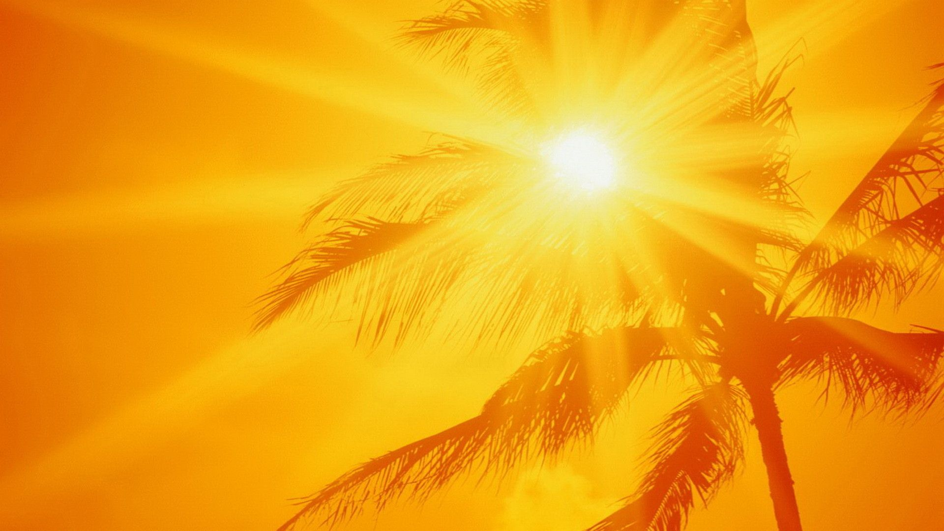 Hot Summer Time Golden Sky Beautiful Nature Landscapes Desktop Wallpapers Awsome Landscape Wallpa Sunshine Wallpaper Summer Wallpaper Tree Wallpaper Iphone