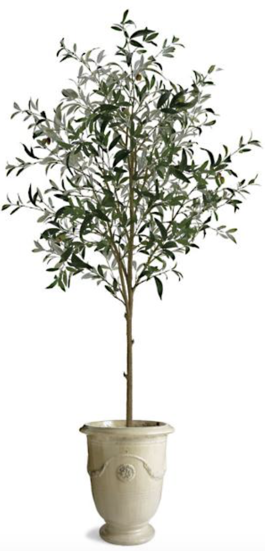70 Potted Olive Tree Frontgate In 2020 Potted Olive Tree Budget Design Olive Tree