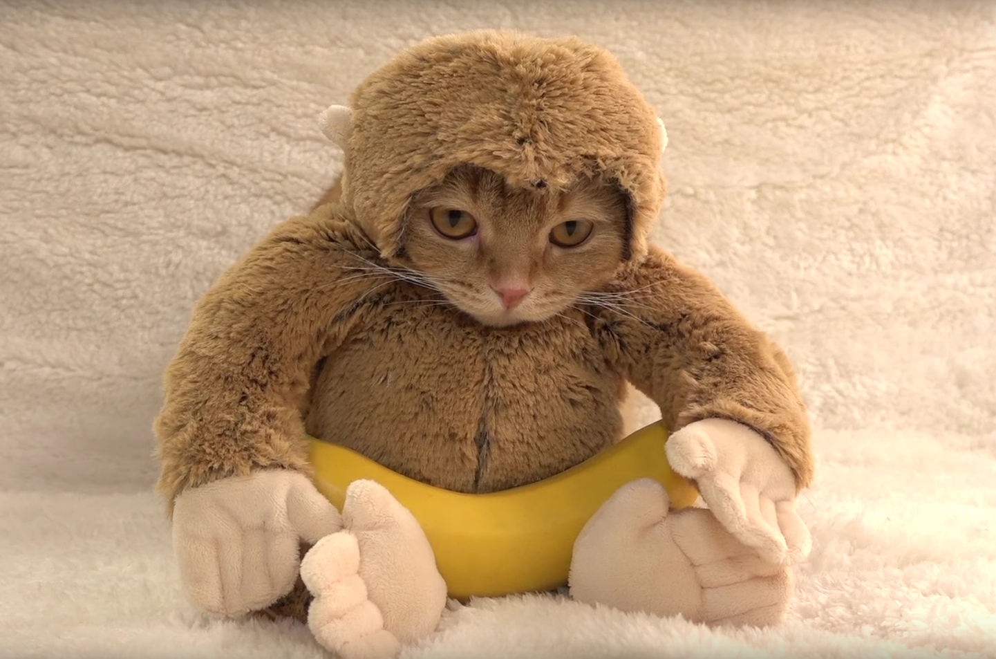 Bizarre Video Just a Cat in a Monkey Suit, Eating a