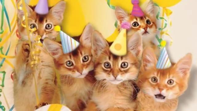 pincheryl stanley on cat birthday  happy birthday cat