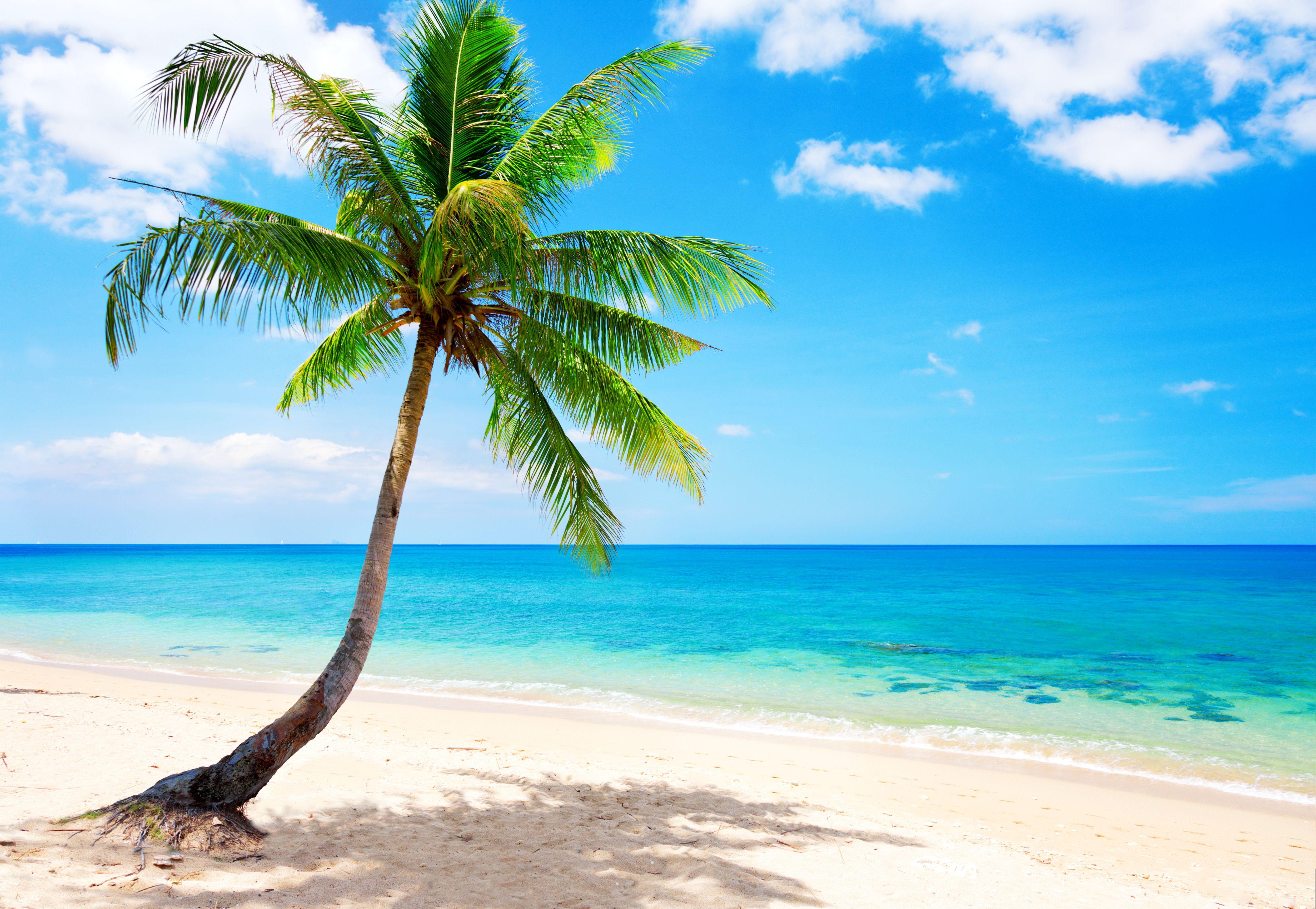 google florida beach wallpaper - photo #32