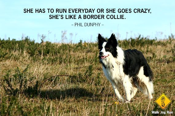 Run Like A Border Collie Collie Border Collie Border Collie Lover