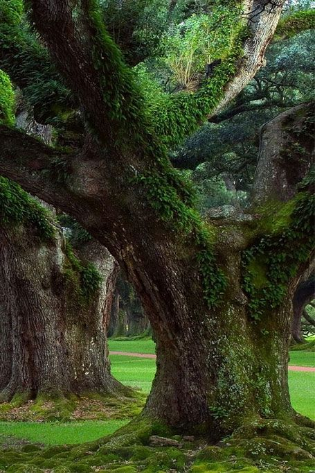 BEAUTIFUL TREE WITH LOTS OF MOSS....