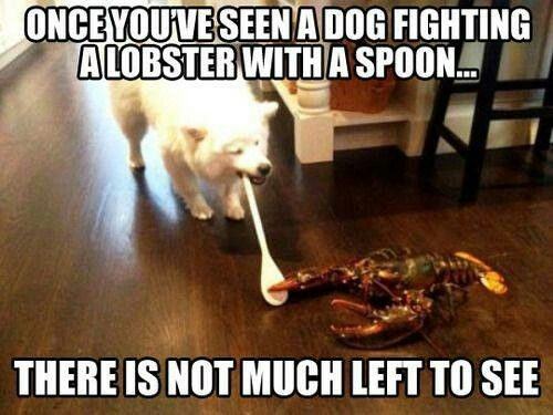 They should release the lobster - he's fought for his freedom!