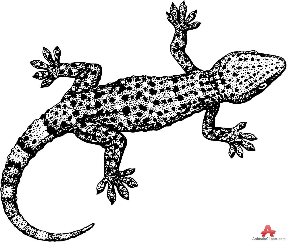 Lizard Clipart Black And White 15 Lizard Logo Clip Art Lizard