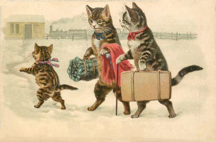 Днем рождения, старинные открытки с котиками