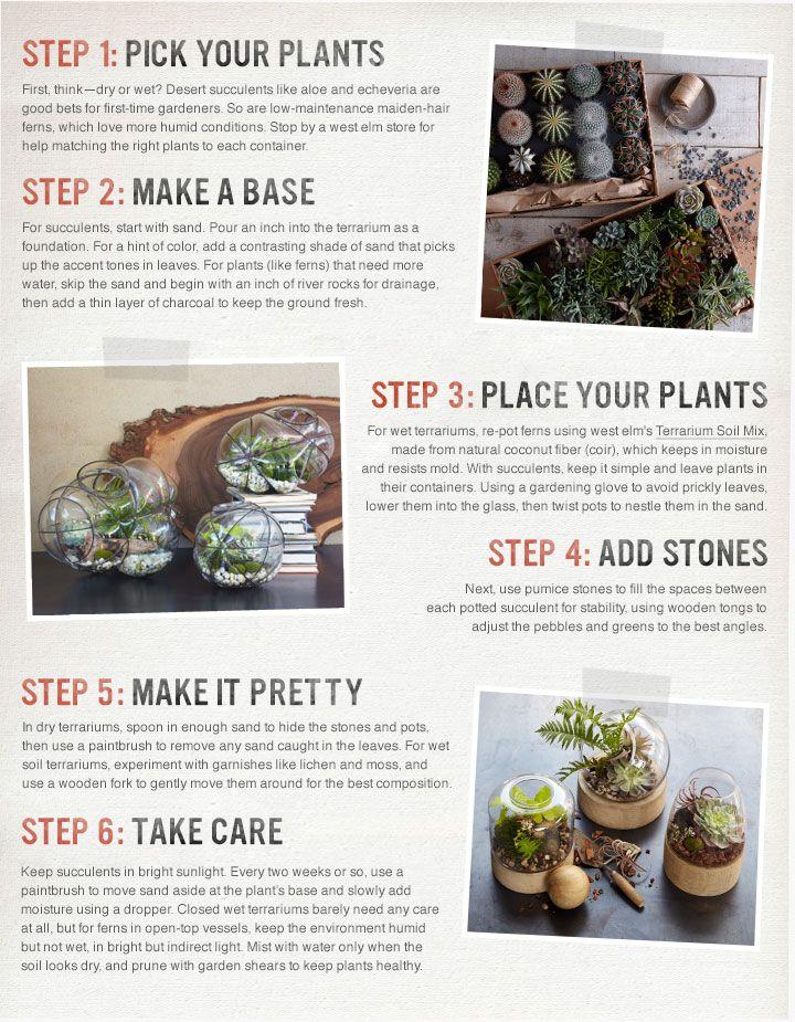 How To Make A Terrarium West Elm Good To Know How To Make
