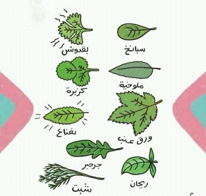 وعلم ينتفع به اهم حاجه الفرق بين الكزبره والبقدونس Good To Know Herbs How To Plan