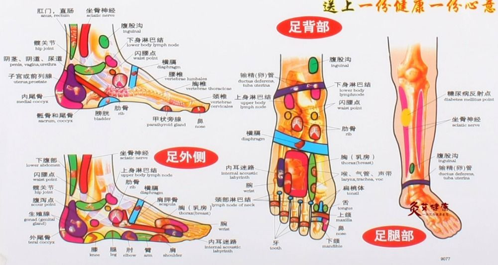 Chart of the foot reflective zone health therapy massage also rh pinterest