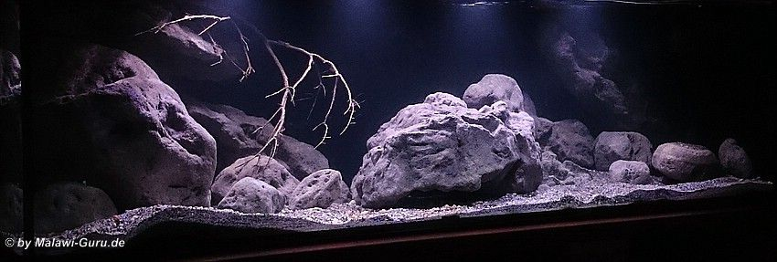 malawi aquarium aquarium aquaristik aquarium. Black Bedroom Furniture Sets. Home Design Ideas