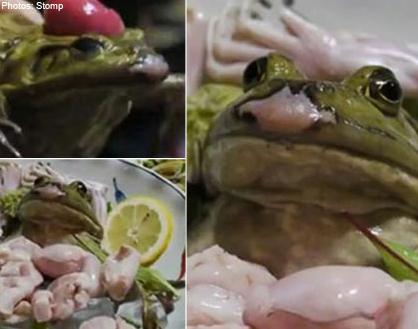 Frog served alive at Japanese restaurant #wtf #bizarre #odd #asia
