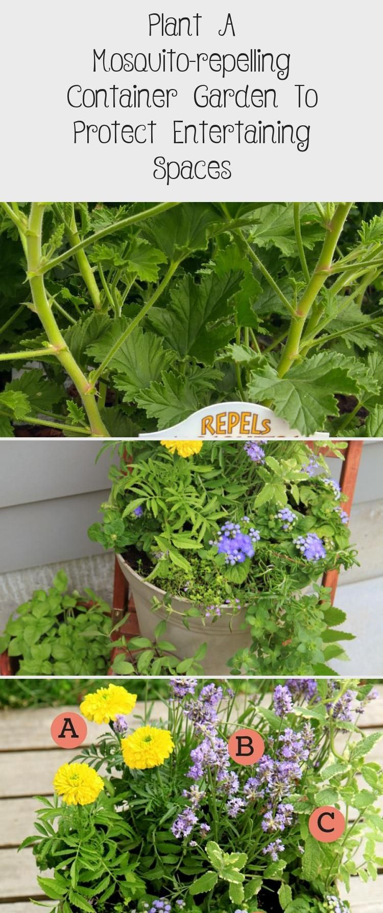 Plant A Mosquito-repelling Container Garden To Protect Entertaining Spaces #mosquitoplants