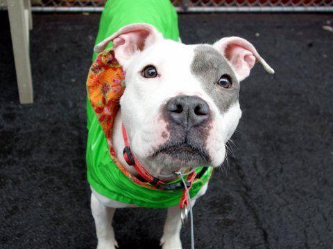 Philomena A1069113 Dog Help Dogs Dog Adoption