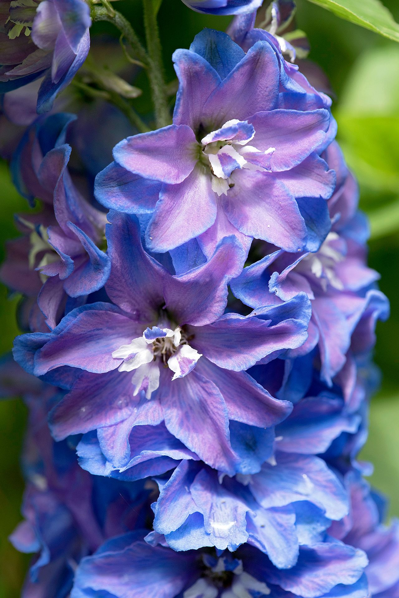 Find Out Your Birth Month Flower (and the Meaning Behind