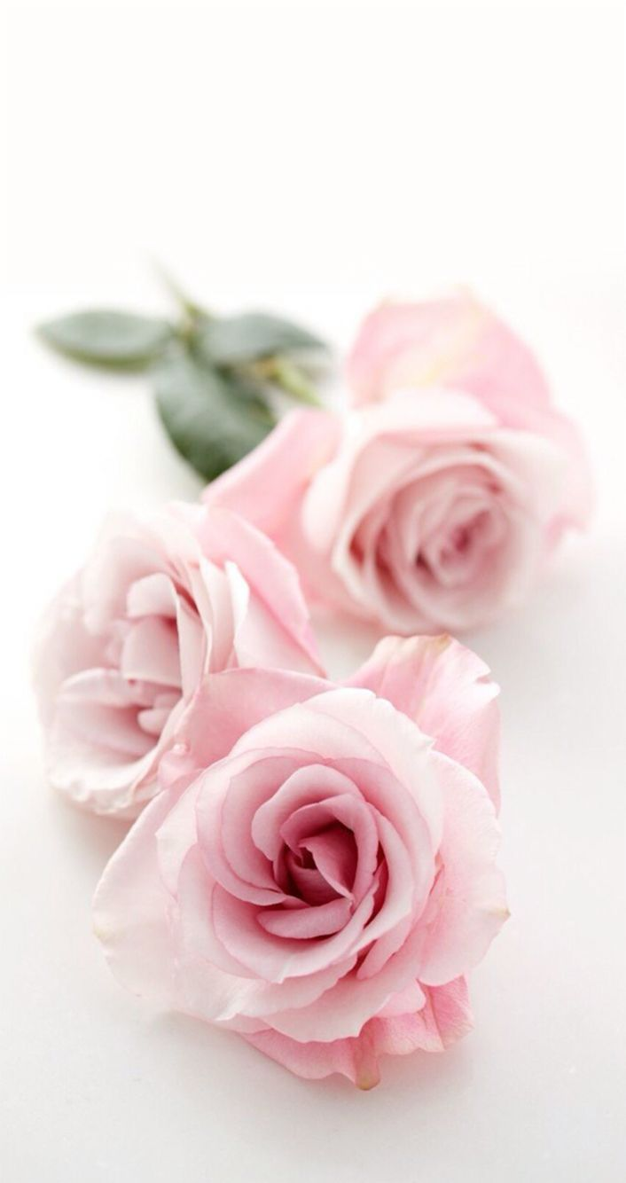 Wallpaper Flower Pink Background Images