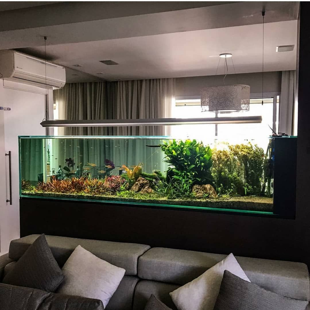 Study Room With Aquarium: The Best Peninsula Style Planted Aquarium We Have Ever